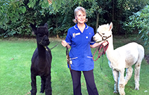 British Alpaca Society National Show Returns